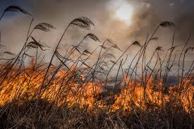 Farm land in Eastern Cape destroyed in fire