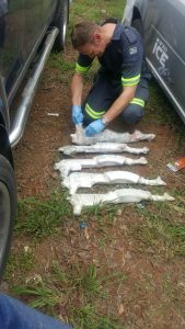 Arms smugglers caught red hand near Komatipoort border