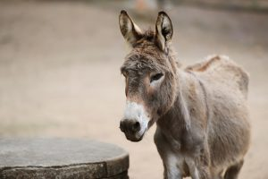 Man jailed after sangoma prescribes sex with donkey - Say no more!