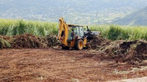 Small-scale farmers are living in fear while land-grabbers destroy their sugar cane crops with bulldozers