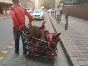 Africa, O Africa! : Man with shopping cart full of chopped cattle heads, walking down the street, arrested by Johannesburg's mayor