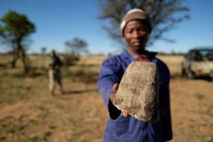 cut rhino horn