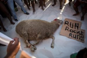 Clifton Beach: Savages slaughter sheep during ritual sacrifice on the shores of the Cape in protest action to cleanse the beach of racism