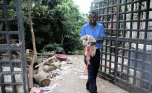 Police uncover Durban dog hoarder's house of horrors