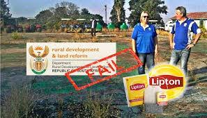 "SA Lipton Tea Plantation Seized Then Destroyed by Incompetent Blacks - This is not the first such ""land restitution"" program to have collapsed under the ANC's rule; more is yet to come"