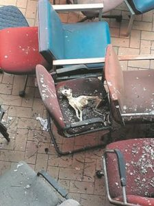 Dog carcass, Pretoria court